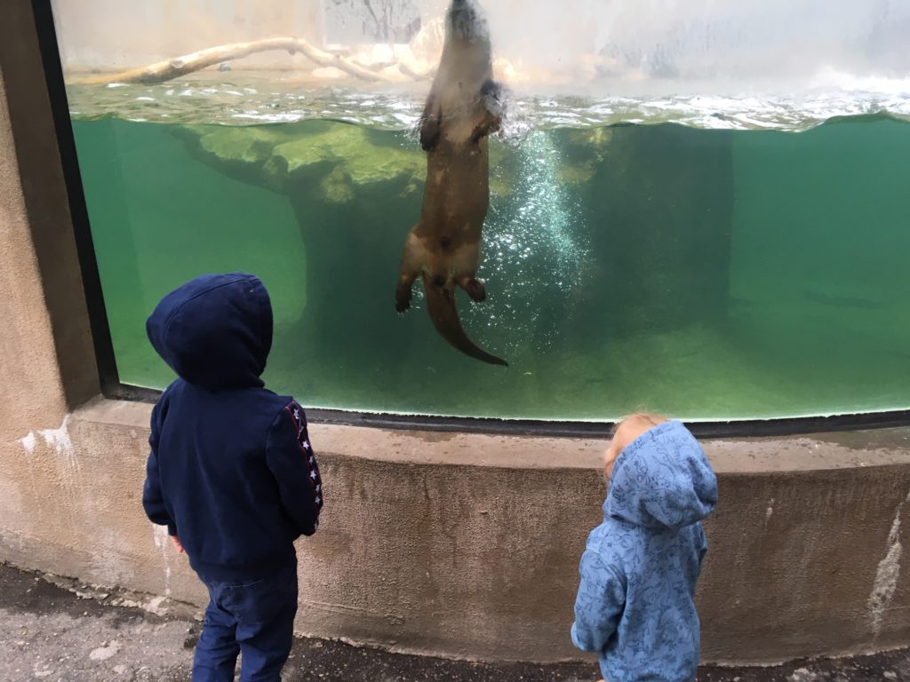 photo of two kids looking at at Otter